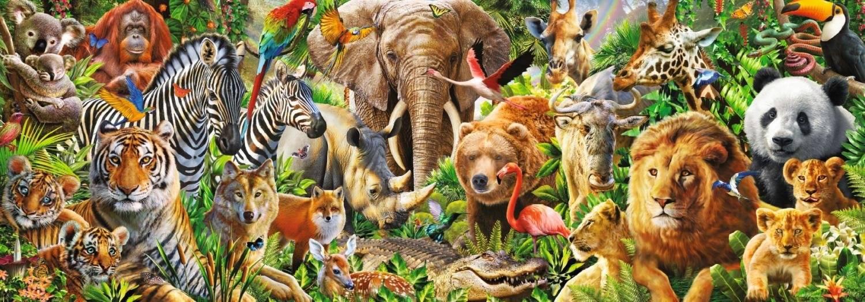 Несколько животных в одной фотографии делакур сильно